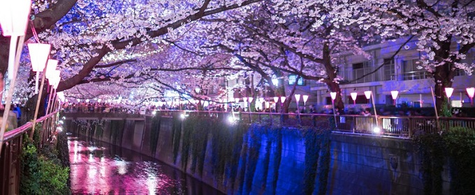 meguro-river at the night